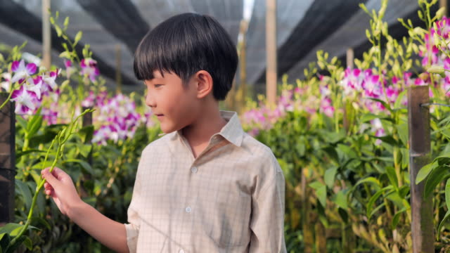 little child boy walking in orchid flower in beautiful spring day. baby boy outdoors in the garden.farming,gardening,agriculture,harvesting and people,education,organic farming,plant care and protection.concept,springtime - formal garden video stock e b–roll