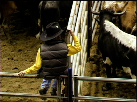 little cowboy sits on railing above corralled cattle - rodeo stock videos & royalty-free footage