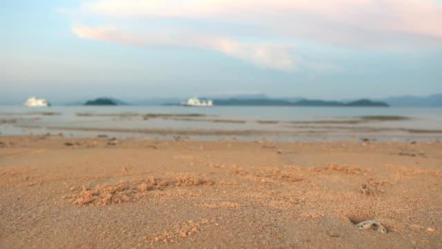 little krabben am strand nahaufnahme - krabbe stock-videos und b-roll-filmmaterial