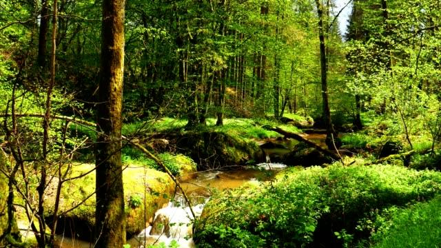 vídeos de stock, filmes e b-roll de pequeno riacho flui na idílica floresta primavera - floresta da bavária