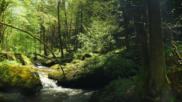 vídeos de stock e filmes b-roll de little creek flowing in idyllic spring forest - dolly shot