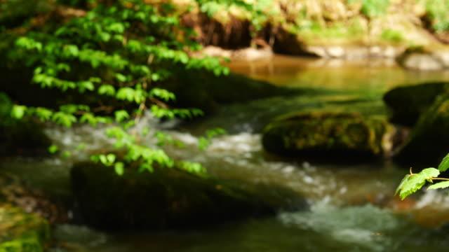 Kleiner Bach fließt In idyllischen Frühlingswald
