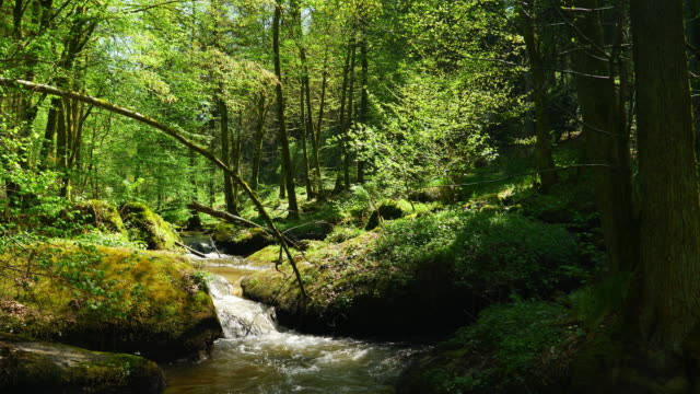 little creek flowing in rocky spring forest - beech tree stock videos and b-roll footage