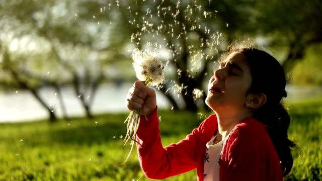 little curly girl blowing dandelion. - dandelion stock videos & royalty-free footage