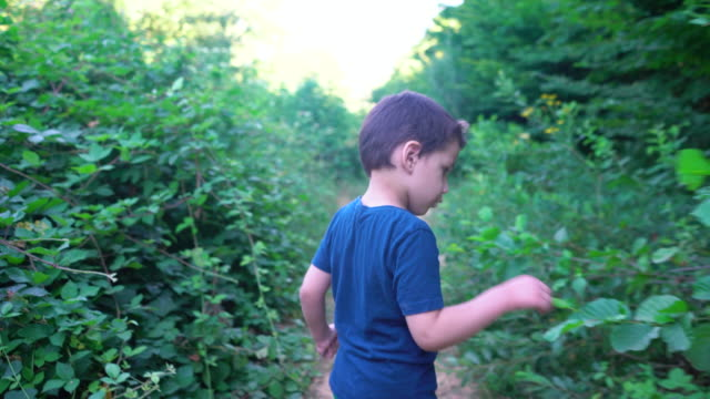 little cute boy walking in the forest - 4 5 years stock videos & royalty-free footage