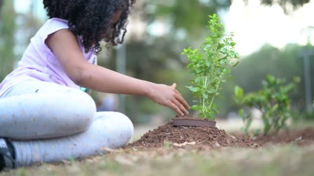 vidéos et rushes de peu jolie fille jeune arbre de plantation sur des sols noirs comme sauver concept monde - développement durable