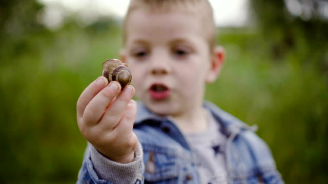 vídeos de stock e filmes b-roll de little explorer - snail