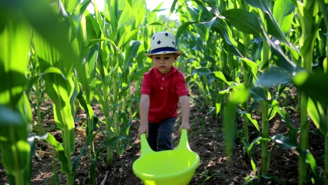 little farmer - wheelbarrow stock videos and b-roll footage
