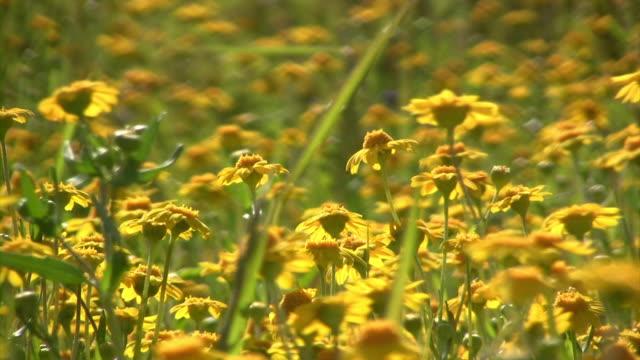 little flowers v.3 (hd) - invertebrate stock videos & royalty-free footage