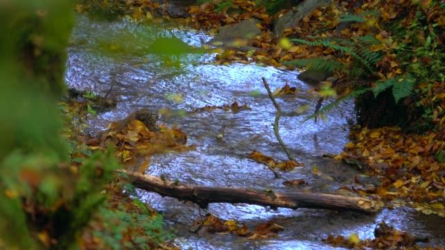 little forest brook, freudenburg, rhineland-palatinate, germany, europe - rhineland palatinate stock videos & royalty-free footage