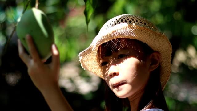 little gardener picking green mango from the mango tree - mango stock videos & royalty-free footage