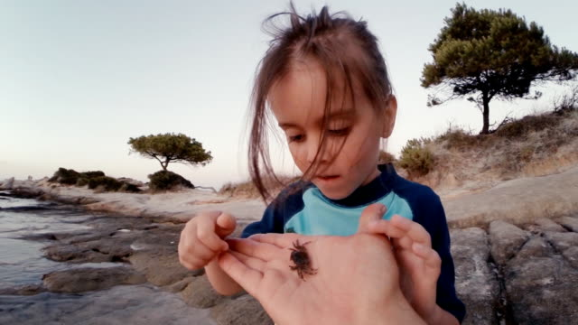 little girl and crab at the beach. supportive father, learning process. - curiosity stock videos & royalty-free footage