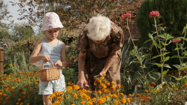 Little Girl And Her Grandmother Picking Flowers In The Garden. Real People, Rural Scene.