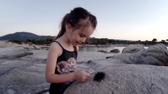 little girl and sea urchin at the beach. learning process. - ricci di mare video stock e b–roll