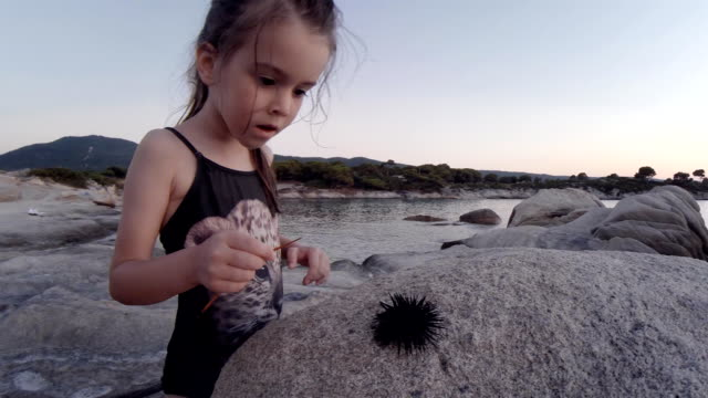 little girl and sea urchin at the beach. learning process. - sea urchin stock videos and b-roll footage