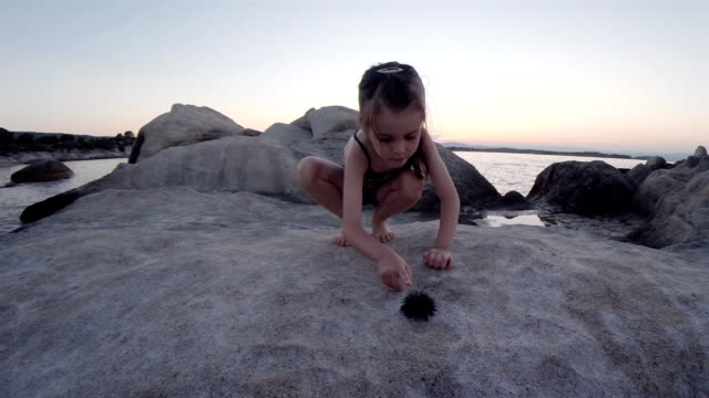 Little Girl And Sea Urchin at the Beach. Learning Process.