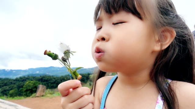 little girl blowing daisy flower - tranquil scene stock videos & royalty-free footage