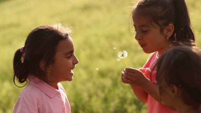 little girl blowing dandelion seeds - nursery school child stock videos & royalty-free footage