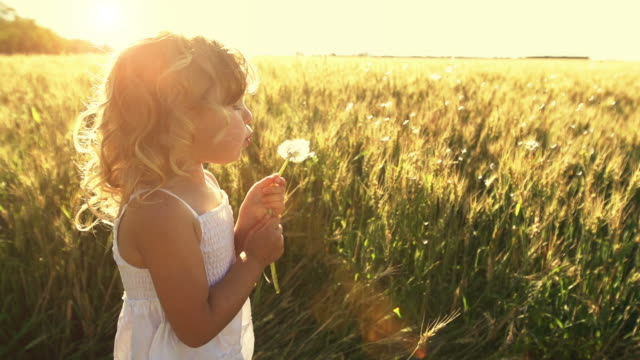 little girl blows plant seeds - blowing stock videos & royalty-free footage
