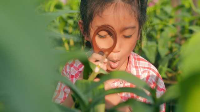 little girl child exploring nature in a garden with a magnifying glass looking for insects.eduction,children,people,springtime,technology,science,summer,fun concept. - magnifying glass stock videos & royalty-free footage