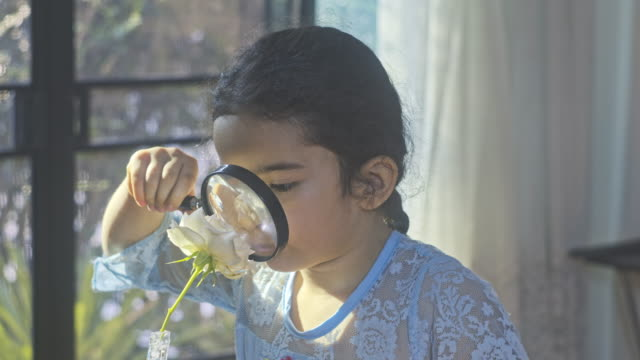 little girl child exploring with a magnifying glass looking for insects in flower.eduction - glass material stock videos & royalty-free footage