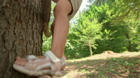 ts mädchen klettern einen baum im wald - baum stock-videos und b-roll-filmmaterial