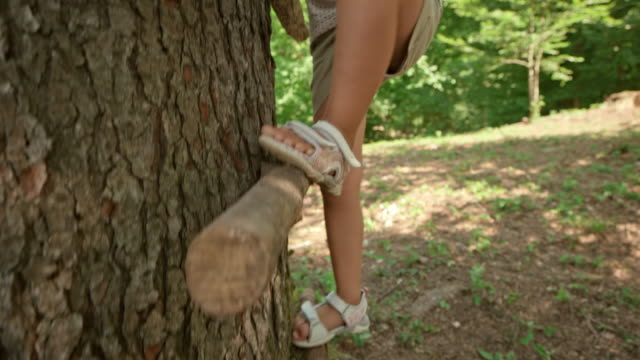 ts little girl climbing down a tree in the sunny forest - primary age child stock videos & royalty-free footage