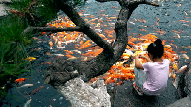 a little girl feeds koi in a pond - feeding stock videos & royalty-free footage