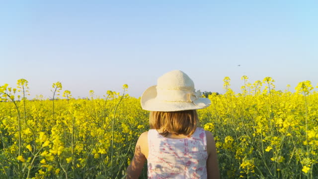 hd steady shot: little girl gathering canola flowers - walking point of view stock videos and b-roll footage