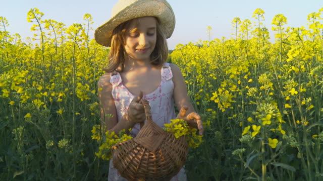 hd 安定した写真: little girl ギャザーキャノーラの花 - 10歳から11歳点の映像素材/bロール