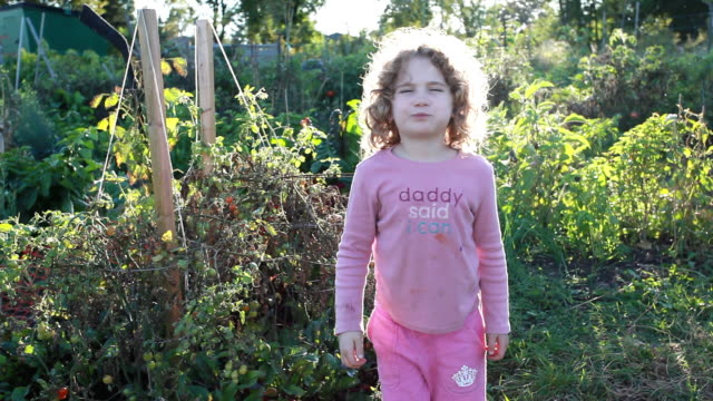 ms little girl grabing tomato off from tomato plant in garden / tornto, ontario, canada - kelly mason videos stock videos & royalty-free footage