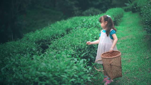 少女収穫茶葉します。 - 作物点の映像素材/bロール