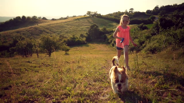 little girl in a walk with puppy - children only stock videos & royalty-free footage