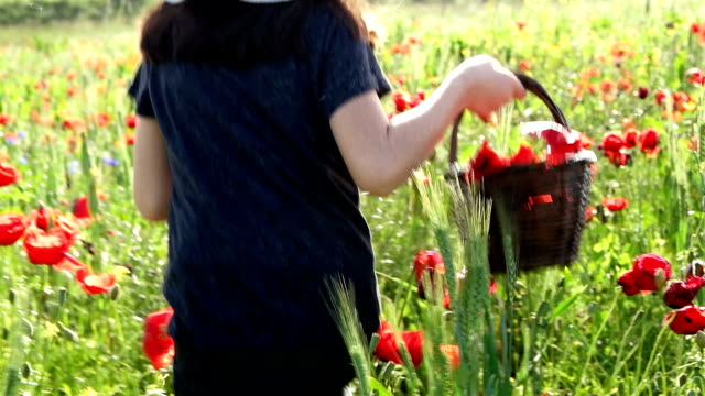little girl in big hat on a field of blooming red poppies - only girls stock videos and b-roll footage