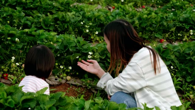little girl(2-3 years) is picking strawberry with her mother - 2 3 years stock videos & royalty-free footage