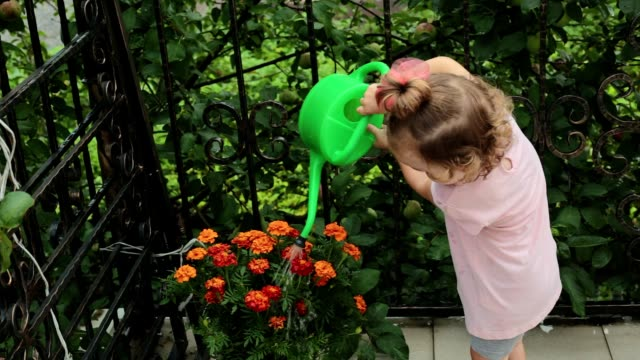 A little girl is watering flowers.
