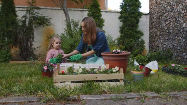 little girl learning how to garden while assisting her mother in potting flowers - recreational pursuit stock videos & royalty-free footage