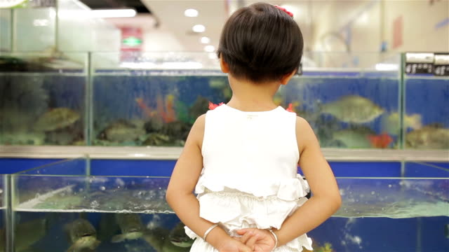 ms little girl looking fish in supermarket /xi'an, shaanxi, china - hands behind back stock videos and b-roll footage