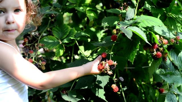 vídeos y material grabado en eventos de stock de niña selección moras - frutas del bosque