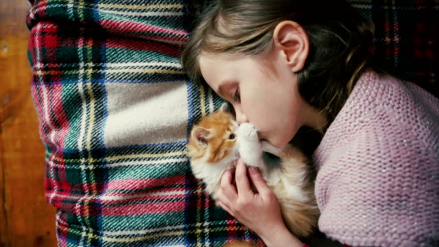 vídeos de stock e filmes b-roll de little girl playing with kitten on the bed - bonito pessoa