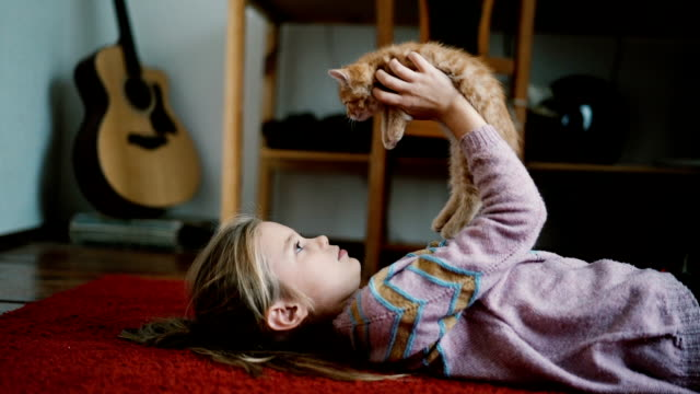 little girl playing with kittens indoors - domestic cat stock videos & royalty-free footage