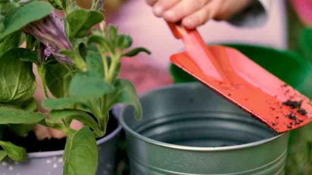 kleine mädchen drücken boden um topfpflanze - gartengerät stock-videos und b-roll-filmmaterial