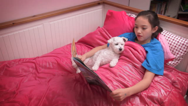 little girl reading bedtime story to pet - havanese stock videos & royalty-free footage