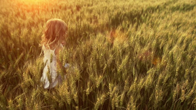 little girl runs through wheat field - grass stock videos & royalty-free footage