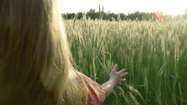 little girl 通る小麦のフィールド - 小学校低学年点の映像素材/bロール