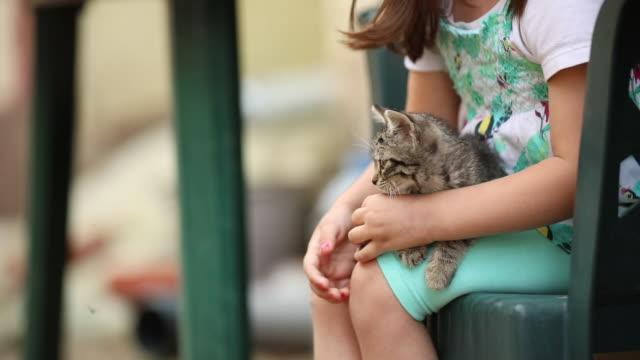 vidéos et rushes de petite fille, passer du temps avec son chaton tabby - prendre sur les genoux