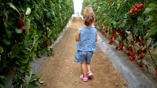 kleines mädchen sprüht tomaten - gewächshäuser stock-videos und b-roll-filmmaterial
