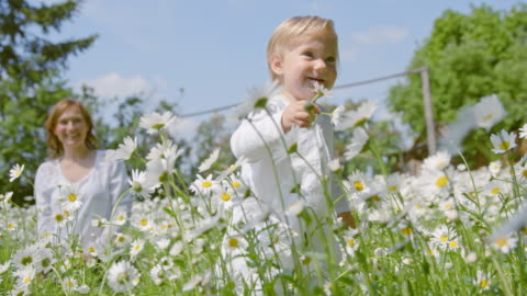 slo mo little girl taking first steps among daisies - springtime stock videos & royalty-free footage