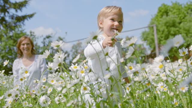 slo mo little girl taking first steps among daisies - daisy stock videos & royalty-free footage