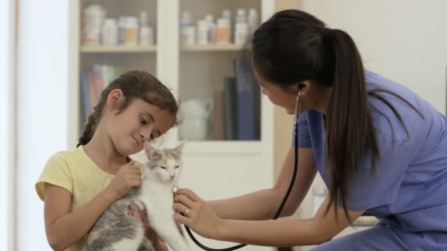 little girl taking her cat to the vet - animal hospital stock videos & royalty-free footage